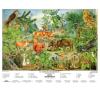 Stiefel Eurocart Kft. Az erdő életközössége   munkaoldal tanulói munkalap tankönyv