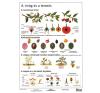 Stiefel Eurocart Kft. A virág és a termés   munkaoldal tanulói munkalap tankönyv