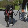 Trixie kerékpáros futtató (TRX1287)