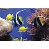 FELLOWES Earth Series™ újrahasznosított egéralátét optikai egerekhez, tengeri halak