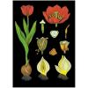 Stiefel Eurocart Kft. Tulipán oktatótabló
