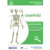 Stiefel Eurocart Kft. Csontváz-oktató CD