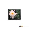 Kingston 8GB Compact Flash (CF/8GB) memória kártya