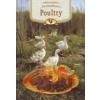 POULTRY - LASTING FLAVOURS - (SZÁRNYAS ÉTELEK)