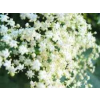 Herbatrend bodzavirág gyógynövénytea, 40 g