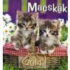 Nincs Adat Macskák 2014