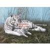 Fehér tigris a ködben