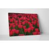 KaticaMatrica.hu Vörös tulipánok