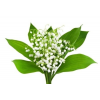 Gyöngyvirág parfümolaj 20 ml