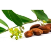 Jojobaolaj BIO (Simmondsia chinensis) - 100 ml
