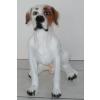 Kutya-Jack Russel Terrier-ülő/hosszú farkú