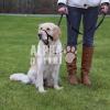 Trixie Kiképzõhám kutyák részére Xl-Rövid 40cm
