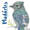 Centrál Médiacsoport Madárles - Színezhető madárportrék