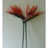 Papagáj virág