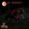 Julius-K9 IDC Powerhám, Baby 1 UV - Narancs