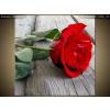 Balkys Trade Nyomtatott kép Gyönyörű rózsa a fapadlón 1113A_1AI