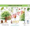 Comenius Lombhullató erdei fák