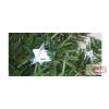 Dekoráció izzósorhoz, csillag, 50 db, ∅5 mm-es LED-re