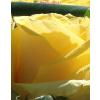 Fehér közepes henger rózsa box sárga rózsákkal