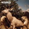 Interpol INTERPOL - Our Love To Admire CD