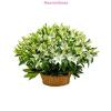 Királyliliom virágkosár