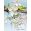 Komar Blossom vlies poszter, fotótapéta XXL2-033 /184x248 cm/