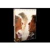 MTVA Apák és lányaik (Dvd)