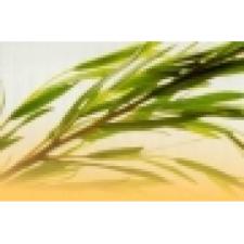 Naturhelix teafa fülgyertya egyéb egészségügyi termék