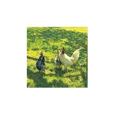 Nortene Fém csirkeháló, 3x csavart hatszög drótháló, 41 mm szemméret, Galvanex (0.5x10m) kerti dekoráció