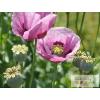 Opium illatolaj 100ml