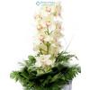 Orchidea fürt zöldekkel díszítve (fehér)