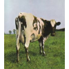 Pink Floyd Atom Heart Mother (CD)