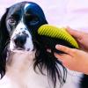 Shoppy Gumikefe és fésű szett kutyáknak