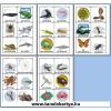 Tiere (Állatok) Német nyelvű TanulóKártya Csomag - 178db-os készlet