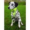 Trixie Biztonsági kendő kutyának xs–s 22–28cm