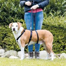 Trixie Lead'n'Walk puha hám kutyáknak (37-54 cm | 20 mm) nyakörv, póráz, hám kutyáknak