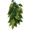Trixie Műnövény Ficus 20*30cm