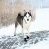 Trixie; Walker Kutyacipő Walker Active Xl 2db/Csomag