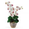 Virág a világba Virágzó orchideák